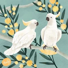 Day of my Australian native project and I couldn't resist painting two iconic Aussies - Sulphur Crested… Australian Painting, Australian Art, Australian Parrots, Bird Illustration, Floral Illustrations, Indigenous Art, Aboriginal Art, Beach Art, Bird Art