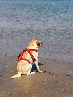 Thor  #bagnino #dog #serenità #unitàcinofila #associazionedeidell'acquaabruzzomolise #dolcezzainfinita #rispetto #nocoercizione #metodigentili #divetimento #attivitàcinofila #salvataggionautico