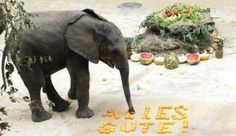 A elefant see some word.This is so funny picture