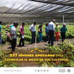 237 jóvenes apoyados para tecnifica el riego de sus cultivos. SAGARPA SAGARPAMX #MéxicoSiembraÉxito