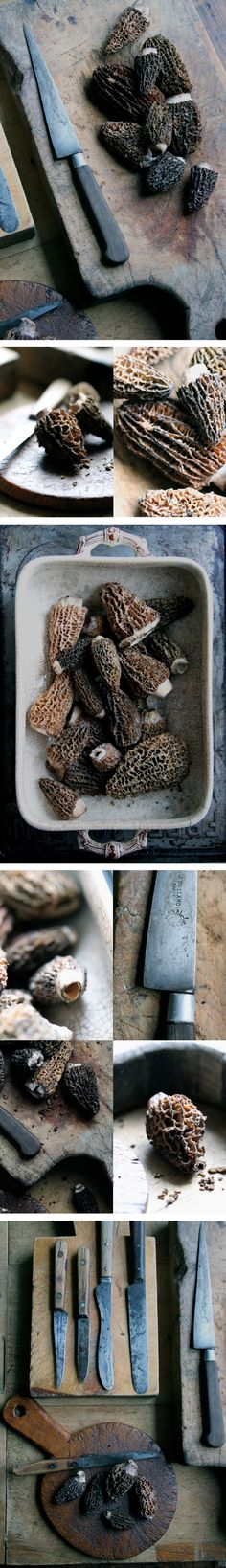 morels---these are my favorites, and the only mushrooms that I can definitely identify, gather and eat with no hesitation.