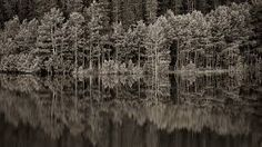Image result for trees reflected