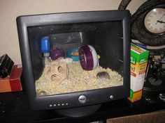 The Mouse Pad is actually a up-cycled gutted computer monitor turned cage for your small rodent friends OR your reptile's dinner 'companions' . Animals For Kids, Cute Animals, Rat Toys, Hamster Cages, Rodents, Hamsters, Rabbit Hutches, Gerbil, Pet Cage