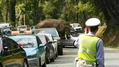 Elephant, Furious Over Unrequited Love, Goes on Car-Crushing Rampage