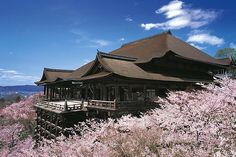 清水寺, Kiyomizu Ji Temple with cherry blossoms in Kyoto ! Kiyomizu Temple, Japan Sakura, Kyoto Japan, Cherry Blossom Japan, Cherry Blossoms, Japan Holidays, Spring Break Trips, Visit Japan, Paisajes