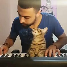Cute Little Animals, Cute Funny Animals, Funny Cute, Cute Cats, Video Chat, Cute Animal Videos, Animal Memes, I Love Cats, Animals Beautiful