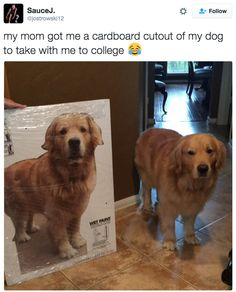 Dog goes to college. My heart! 24 Pictures That Will Make You Smile Way More Than They Should