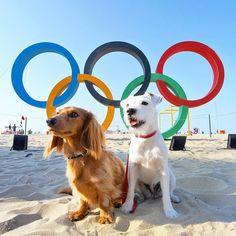 Sad the Summer Olympics has come to an end! Congrats to all the amazing athletes #Repost @django_and_chloe  #olympics2016 #olympics #cidadeolimpica #olympicrings #rio2016 #roadtorio #closingceremony