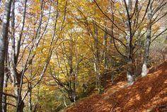 Grevolosa-Puigsacalm-(12-11-11)-040.jpg (1764×1181)