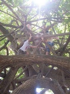 i'm grateful for . 'the park of all parks, best playground EVER' Im Grateful, Tree Forest, Make Me Smile, Playground, Things To Do, Park, Climbing, Design, Trees