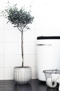 I love this indoor olive tree. I love olive trees. Black Tiles, White Tiles, Bathroom Inspiration, Interior Inspiration, Olive Tree, Topiary, Beautiful Interiors, Indoor Plants, Indoor Trees