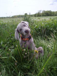 Boxer Dog Names: Popular Male & Female Boxer Names ...