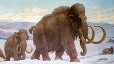 Copyright free pics on Mammoth - Google Search