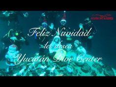 Nacimiento en un Cenote en el Estado de Yucatán, Yucatán Dive Altabrisa