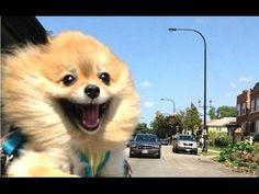 Cani, gatti & co VIDEO Divertenti: BUFFISSIMI!!!