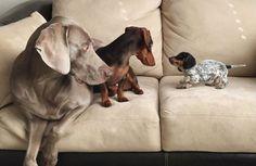 Deze twee bevriende honden hebben er een nieuw vriendje bij. De beste match ooit!