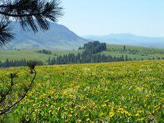 GROWISER, a native plants [preserve?] near La Grande, Oregon