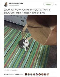 60 Trendy Ideas For Memes Love Funny Smile Funny Animal Memes, Cute Funny Animals, Funny Animal Pictures, Cute Baby Animals, Cute Cats, Funny Cats, Funny Memes, Memes Humor, Funny Sayings