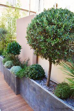 Floreiras junto ao muro podem receber inúmeras espécies de plantas, desde arbustos, topiarias até pendentes e rasteiras. O bom da topiaria é que além de perenes deixam o espaço limpo, em ordem.
