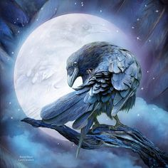 Shop for raven art from the world's greatest living artists. All raven artwork ships within 48 hours and includes a money-back guarantee. Choose your favorite raven designs and purchase them as wall art, home decor, phone cases, tote bags, and more! Raven Art, Diamond Painting, Moon Art, Animal Art, Drawings, Fine Art America, Art, Pictures, Bird Art