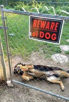 I am aware of dog