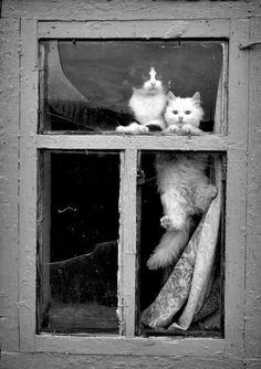 Obsevando en la ventana