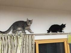 野良猫を保護して一年経ったから成長過程を貼って行く - ゴールデンタイムズ