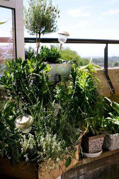 London balcony close up plants