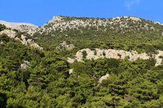 Pine forest in Zaros - Vorizia