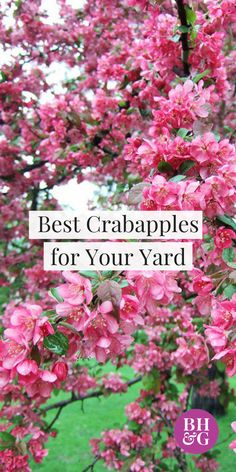 Check out our top picks for crabapple trees for your yard or garden! If you want pretty pink color, white flowers, rosy-red blooms, or large red fruits, there are ideas for everyone's style. Each option is interesting and unique, and will be a great addition to your landscape. #trees #crabapple #garden