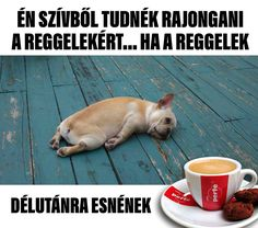 REGGEL.. Funny Animals, Cute Animals, Just For Laughs, Funny Comics, Funny Moments, Funny Photos, Puns, French Bulldog, Laughter