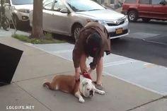 38 cachorros que est�o exaustos demais para viver hoje