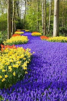 Keukenhof, Holland, World's Largest Flower Garden. I was here and for sure is a must in your trip to Holland Beautiful World, Beautiful Gardens, Beautiful Flowers, Beautiful Places, Beautiful Pictures, Beautiful Park, Beautiful Scenery, Amazing Places, Parcs