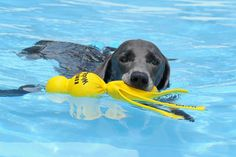 On a hot summer day theres nothing better than a nice swim with your Water Wubba
