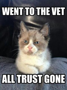Went to the vet All trust gone