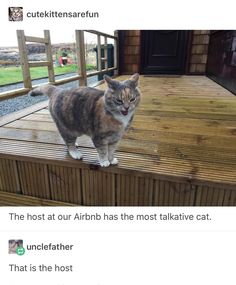 15 Fresh Animal Memes That Are All You Need This Morning - World's largest collection of cat memes and other animals Funny Animal Memes, Cute Funny Animals, Cat Memes, Funny Cute, Cute Cats, Adorable Kittens, Pretty Cats, Funny Memes, I Love Cats