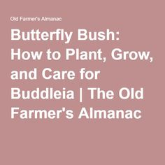 Butterfly Bush: How to Plant, Grow, and Care for Buddleia | The Old Farmer's Almanac
