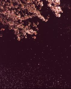 Stock Photo : Cherry blossom