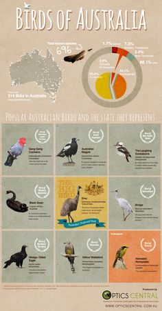 BIRDS OF AUSTRALIA  An overview of bird species found in Australia and the endangered count. Birds that represent the each state. Produced by http://www.opticscentral.com.au #australia #birds