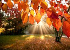 sunrays light up orange leaves