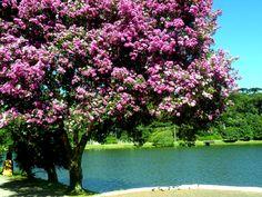 Lago São Bernardo - São Francisco de Paula - RS