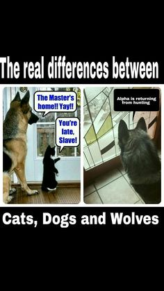 Cats, Dogs and Wolves!