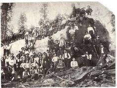 Over 100 people stand with a logged giant sequoia tree in California, 1917 Giant Sequoia Trees, Giant Tree, Big Tree, Vintage Pictures, Old Pictures, Old Photos, Forest Pictures, Sequoiadendron Giganteum, Bonsai