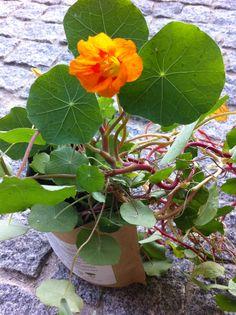 Grow bag chagas/capuchinhas Life in a bag