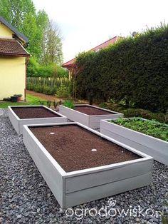 Warzywa uprawiane w skrzyniach, pojemnikach - strona 40 - Forum ogrodnicze - Ogrodowisko