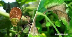 Garden Works, Garden Pests, Agriculture, Garden Design, Plant Leaves, Projects To Try, Home And Garden, Nature, Flowers