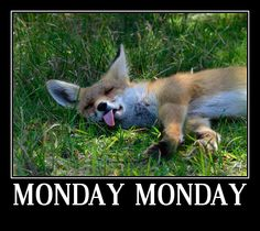 I Hate Mondays, Animals, Animales, Animaux, Animal, Animais, Dieren