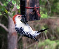 The Joy of Bird Watching and Living a Simple Life: Jean's Bird Cakes ~ The Recipe