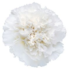 FiftyFlowers.com - White Carnation Flowers - 4 bunches, 100 stems for $99.99