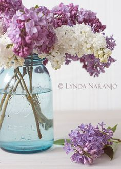 choice for centerpiece: a bunch of lilacs placed in a mason jar. (My dh used to bring me fresh lilacs from his yard when we were dating - one of many reasons why I love lilacs) Lilac Flowers, Beautiful Flowers, Beautiful Things, Vase Transparent, Blue Mason Jars, Little Corner, Spring Photos, Ball Jars, All Things Purple